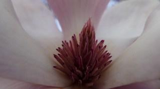 magnolia-09