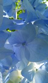 big petals