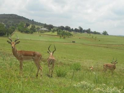 Oh!Deer!!