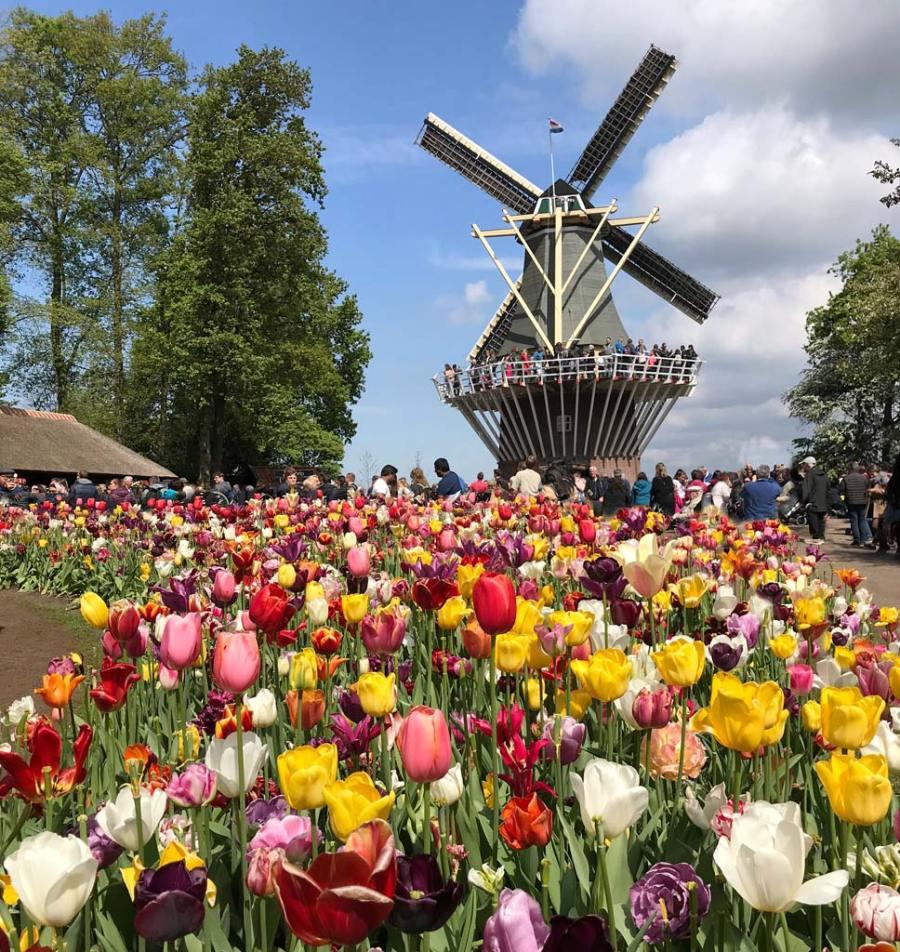 Parco Keukenhof è la destinazione perfetta per chi vuole vedere la fioritura dei tulipani in Olanda