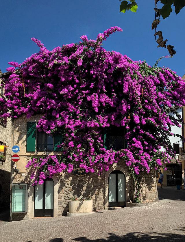 La buganvillea di Sirmione tra le vie del centro storico è una delle foto da postare su Instagram
