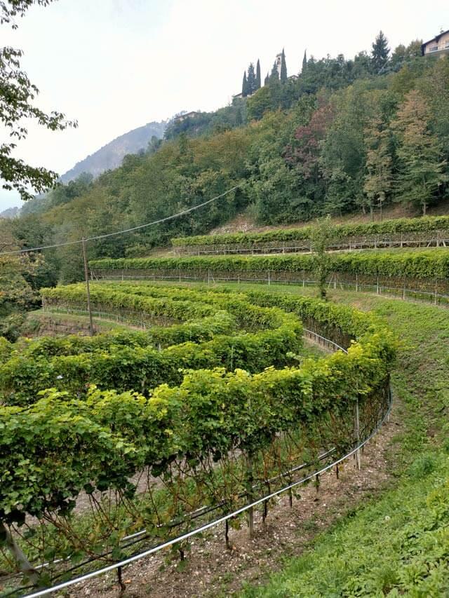 L'azienda agricola di Roberto Zanetti si trova a Voltino (Tremosine)