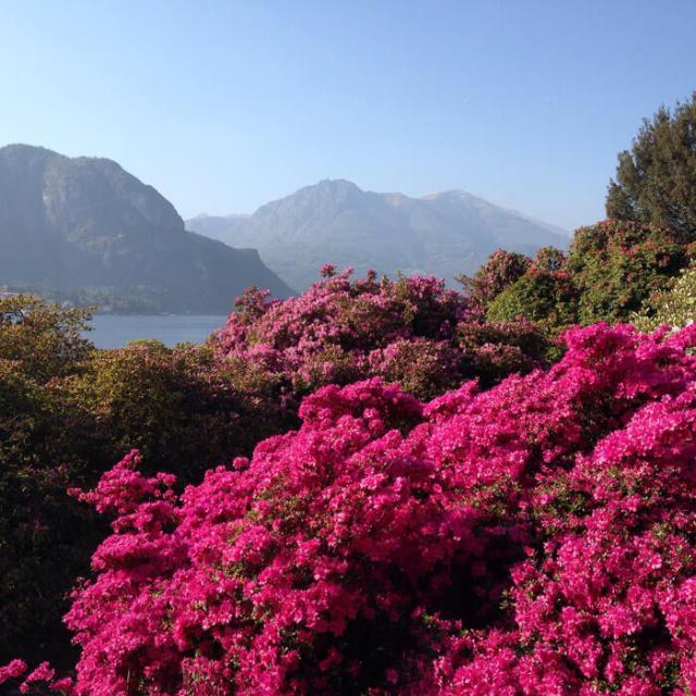 A Bellagio bisogna vedere i colori dei giardini di Villa Melzi