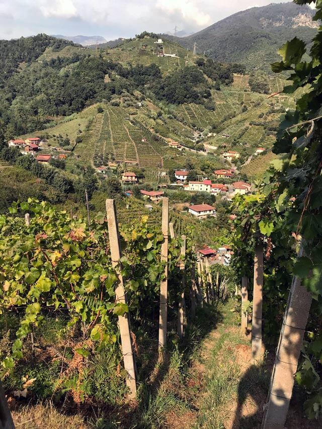 La Strada del vino dei colli del Candia è un percorso perfetto per il trekking