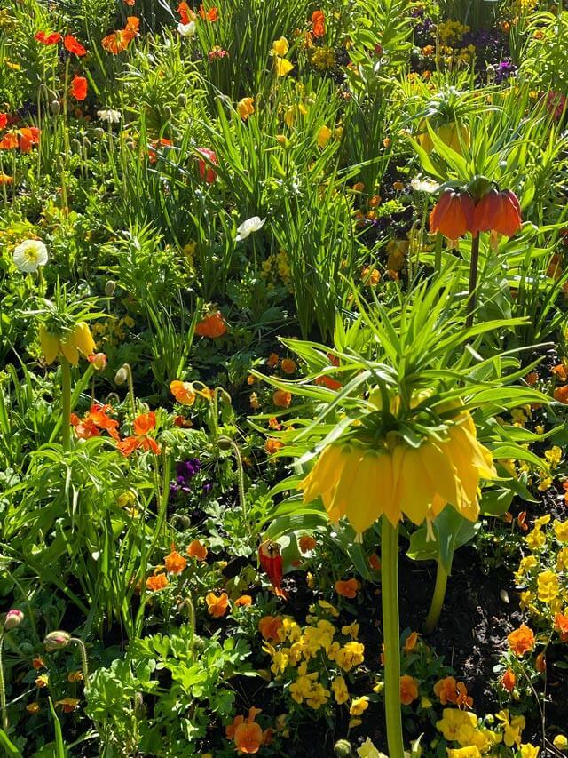 La Fritillaria imperiale è da vedere nei Giardini Trauttmansdorff in Alto Adige