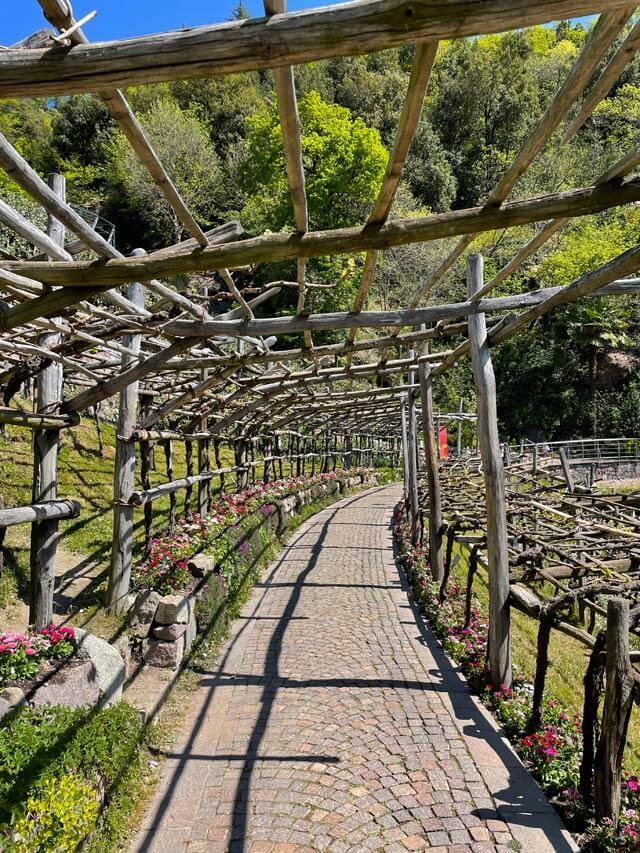 Un reticolato in legno per coltivazione della vite nei Giardini Trauttmansdorff