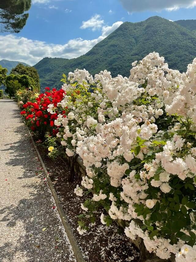 Villa Pizzo sul Lago di Como ha una collezione di rose profumate