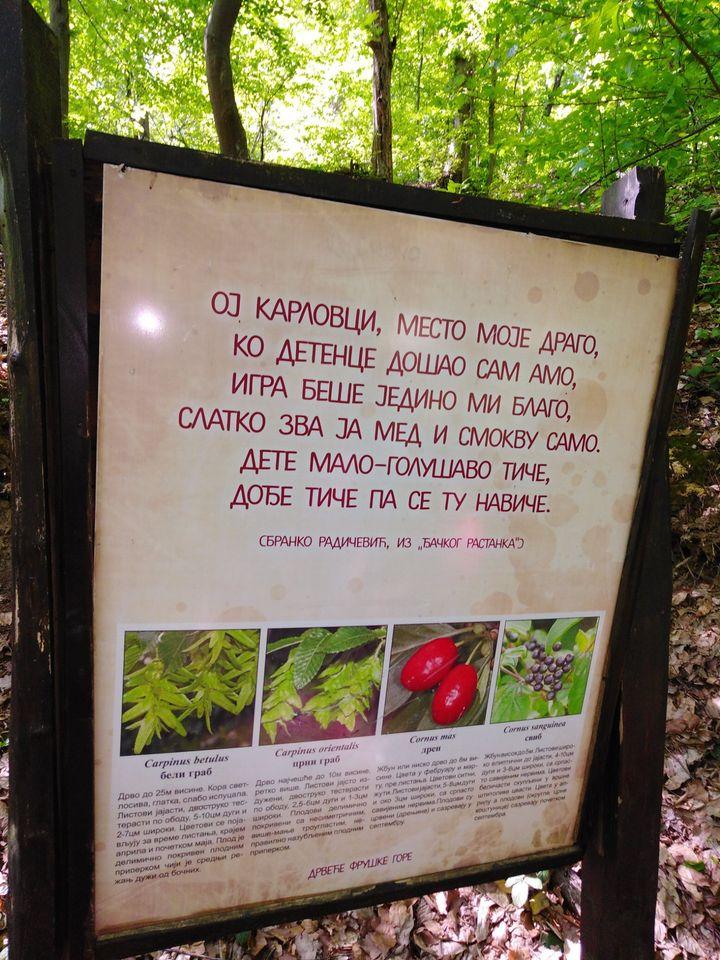 Pešačka staza koja vodi do groba Branka Radičevića