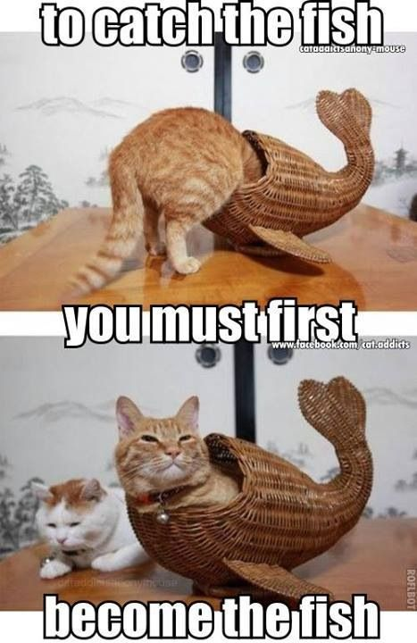 To catch fish -  Funniest Cat Memes Collection #meme awesome