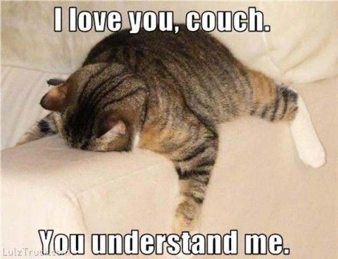 Top Funniest Memes Collection #pic cat