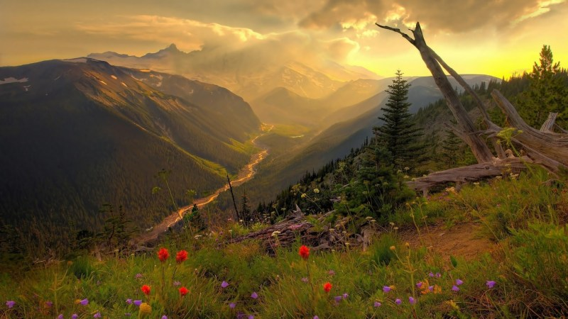 25+ refreshing nature wallpapers Download for your Smartphone 24
