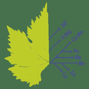Conseil agro-œnologique, Nutrition de la vigne