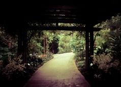 Singapore Botanical Gardens - sree is travelling (28)