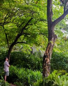 Singapore Botanical Gardens - sree is travelling (38)
