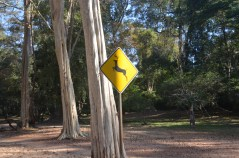Deer Crossing Sign at Angkor Wat