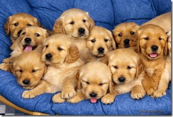 puppies02