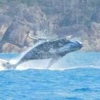 www.sreep.com wp-1480972822739 Australien, Whitsunday Islands: Segeltrip ins Paradies