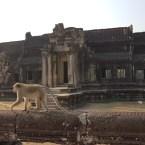 www.sreep.com 20180214_081340 Cambodia: Tempelanlage Ankor Wat - Kambodschas Wahrzeichen