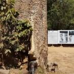 www.sreep.com 20180214_112450 Cambodia: Tempelanlage Ankor Wat - Kambodschas Wahrzeichen