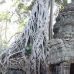 www.sreep.com 20180214_113843 Cambodia: Tempelanlage Ankor Wat - Kambodschas Wahrzeichen