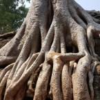 www.sreep.com 20180214_114321 Cambodia: Tempelanlage Ankor Wat - Kambodschas Wahrzeichen