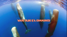 Wave Tribe Is A Community Video