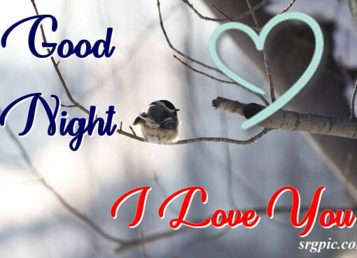 with-hurt-chickadee-bird-on-branch-good-night