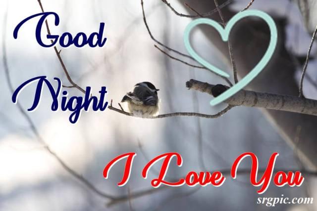 with-hurt-chickadee-bird-on-branch-good-night