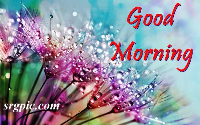 positive-morning-quotes-dewdrops