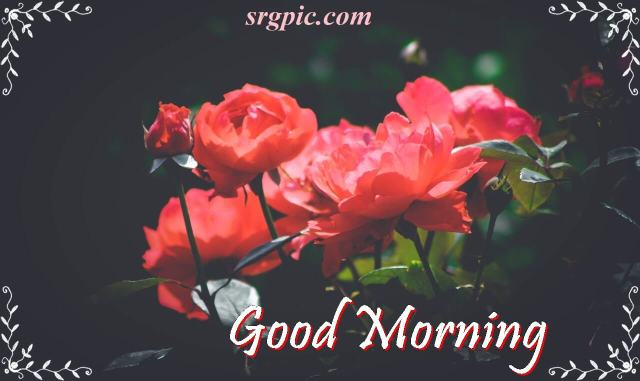 good-morning-with-red-rose
