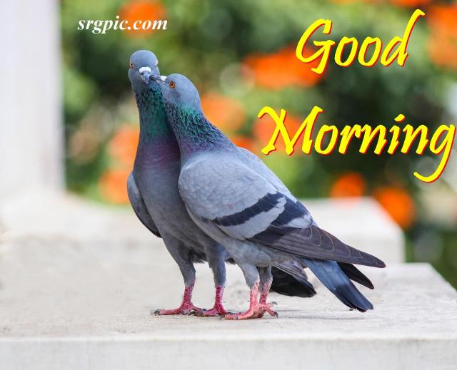 love-birds-good-morning-images-3