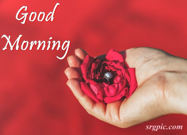 rose-on-hand-with-good-morning