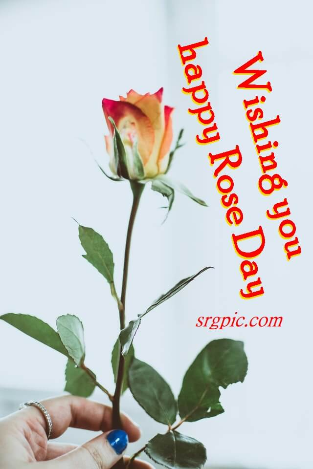 happy-rose-day-special