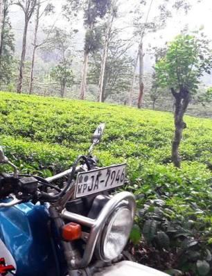 susil bike tours sri lanka (4)