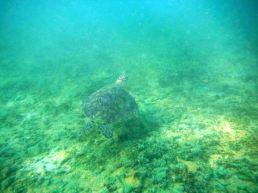 Snorkelling Polhena Madiha Coral Reef Turtle Colour-fish Sri Lanka