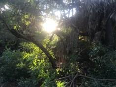 sunlight-05