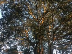 trees-05