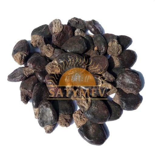 SriSatymev Bhilawa Seeds