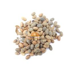 SriSatymev Jamalghota Seeds | Danti Mool