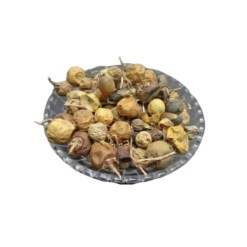 SriSatymev Kantakari Fruit | Kateri