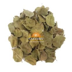 SriSatymev Sheesham Leaves | Shisham Leaves Dry
