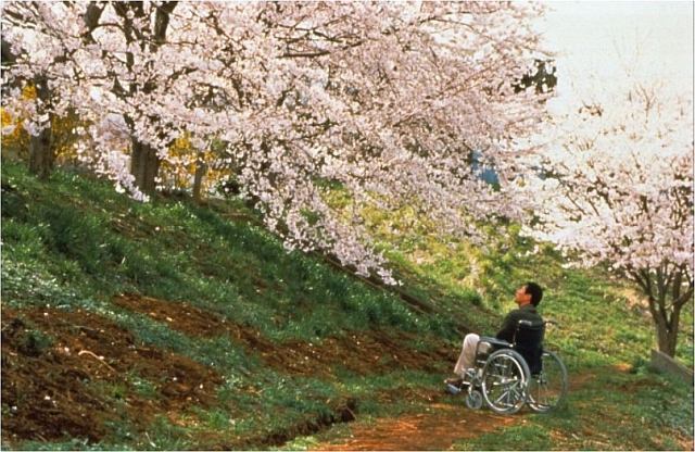 Ren Ohsugi as retired police officer Horibe looking to the Sakura trees, 1996