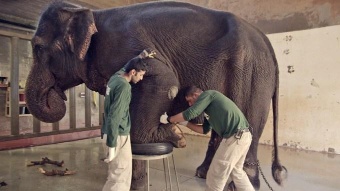 4_holyzoo_ammar_shachar_elephant-%d7%92%d7%9f-%d7%97%d7%99%d7%95%d7%aa-%d7%a7%d7%93%d7%95%d7%a9-credit-katharina-waisburd