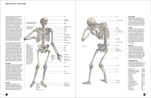 анатомия13