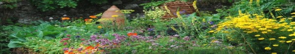 Quality plants at reasonable prices in Hertfordshire from ...