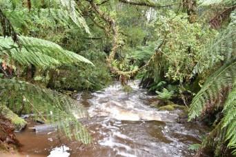 St Columba Falls 2