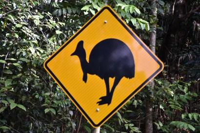 Casoar Australie