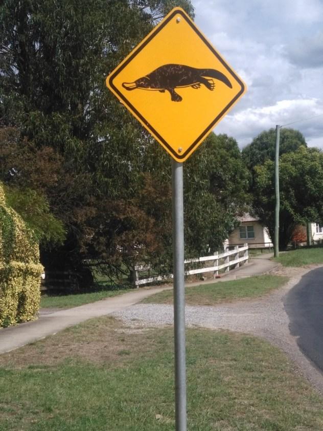 ornithorynque Australie
