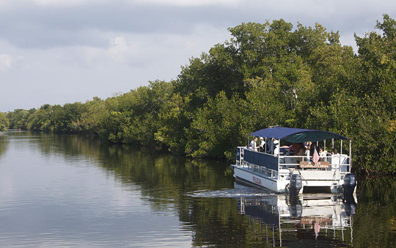 Tourists to the Everglades National Park learn about American Crocodiles while on a boat tour. Photo by Todd Pierson