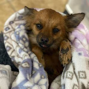Giving Tuesday-Because Foxy's life matters